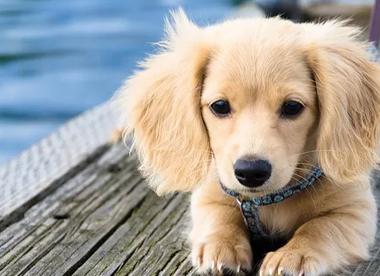 宠物医院讲解如何给狗狗清洁